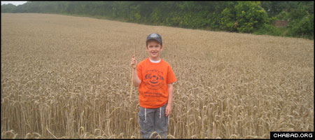 A camper from Gan Israel Chabad-Lubavitch Day Camp of North London explores a field of wheat in the Kent countryside.