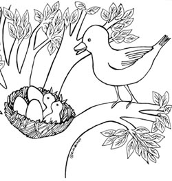 Baby Bird In A Nest Coloring Pages